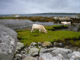 irland_096